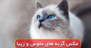 عکس گربه ناز برای پروفایل