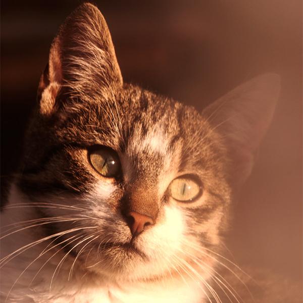 عکس جدید گربه های زیبا