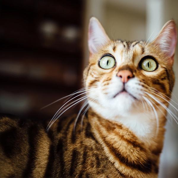 عکس گربه زیبا برای پروفایل