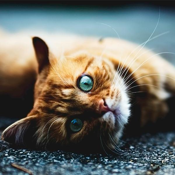 عکس پروفایل گربه ای
