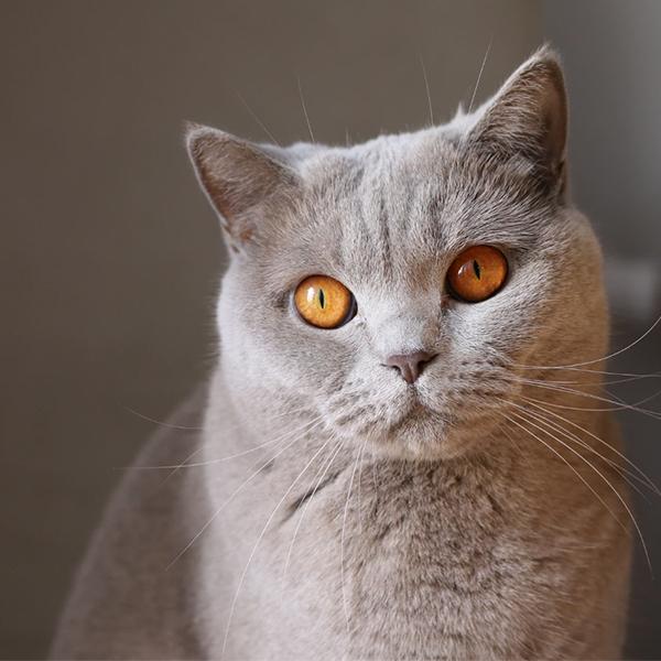 عکس پروفایل گربه پشمالو