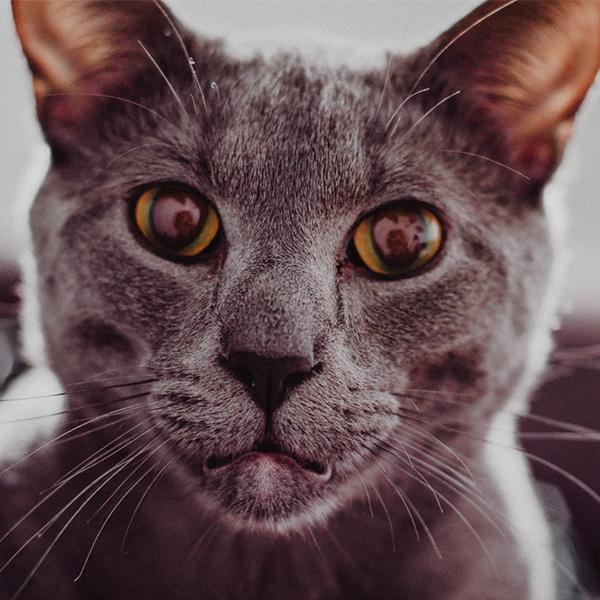 عکس گربه برای پروفایل تلگرام