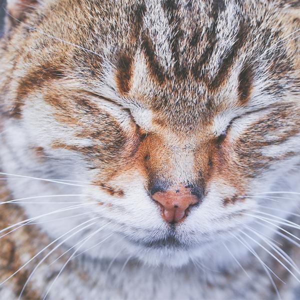 عکس پروفایل گربه ملوس