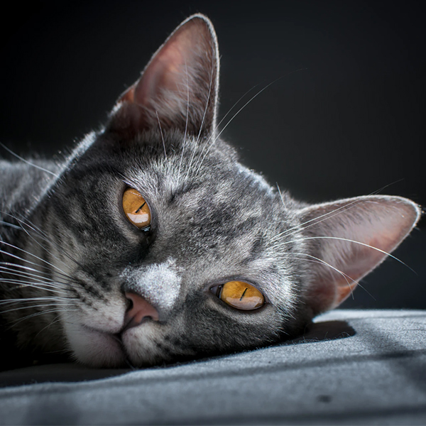 عکس پروفایل گربه غمگین
