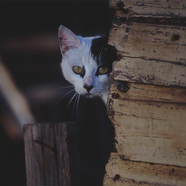 عکس جدید گربه خوشگل