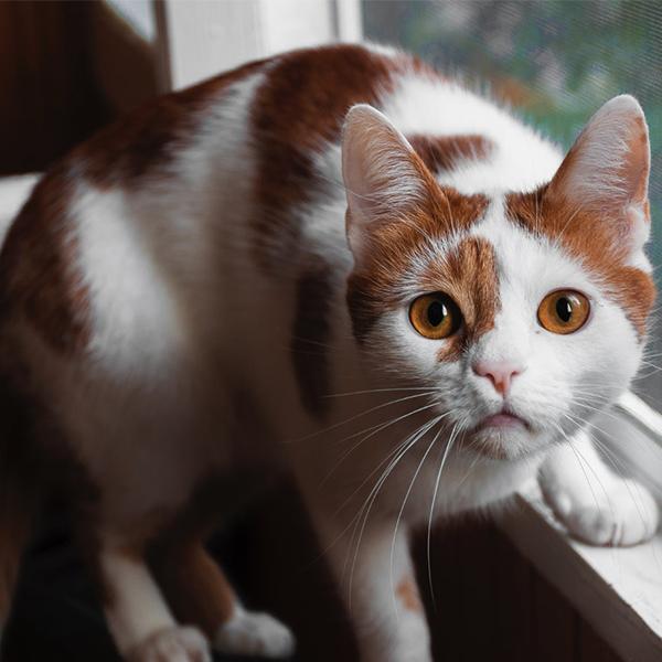 عکس گربه برای اینستاگرام