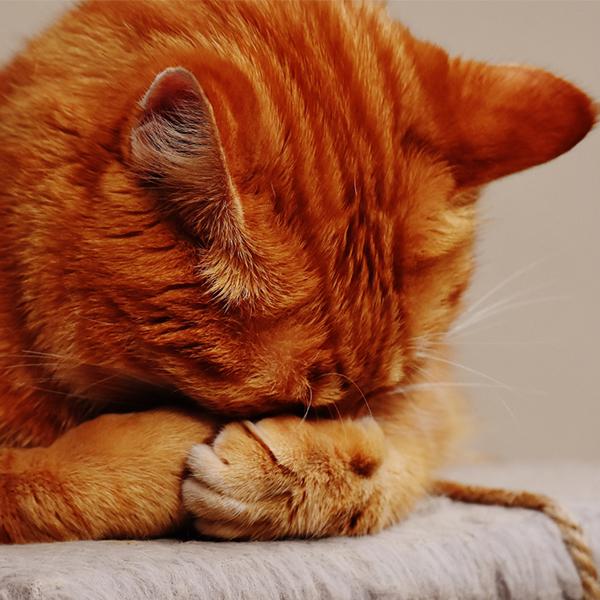 عکس پروفایل گربه ناراحت