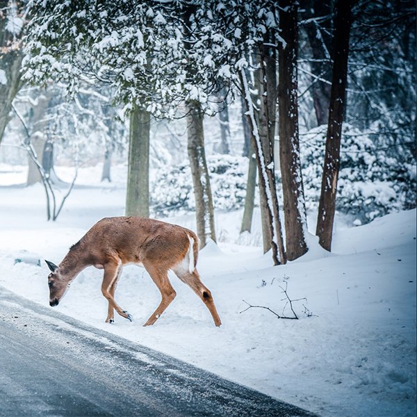 پروفایل زمستانی خاص