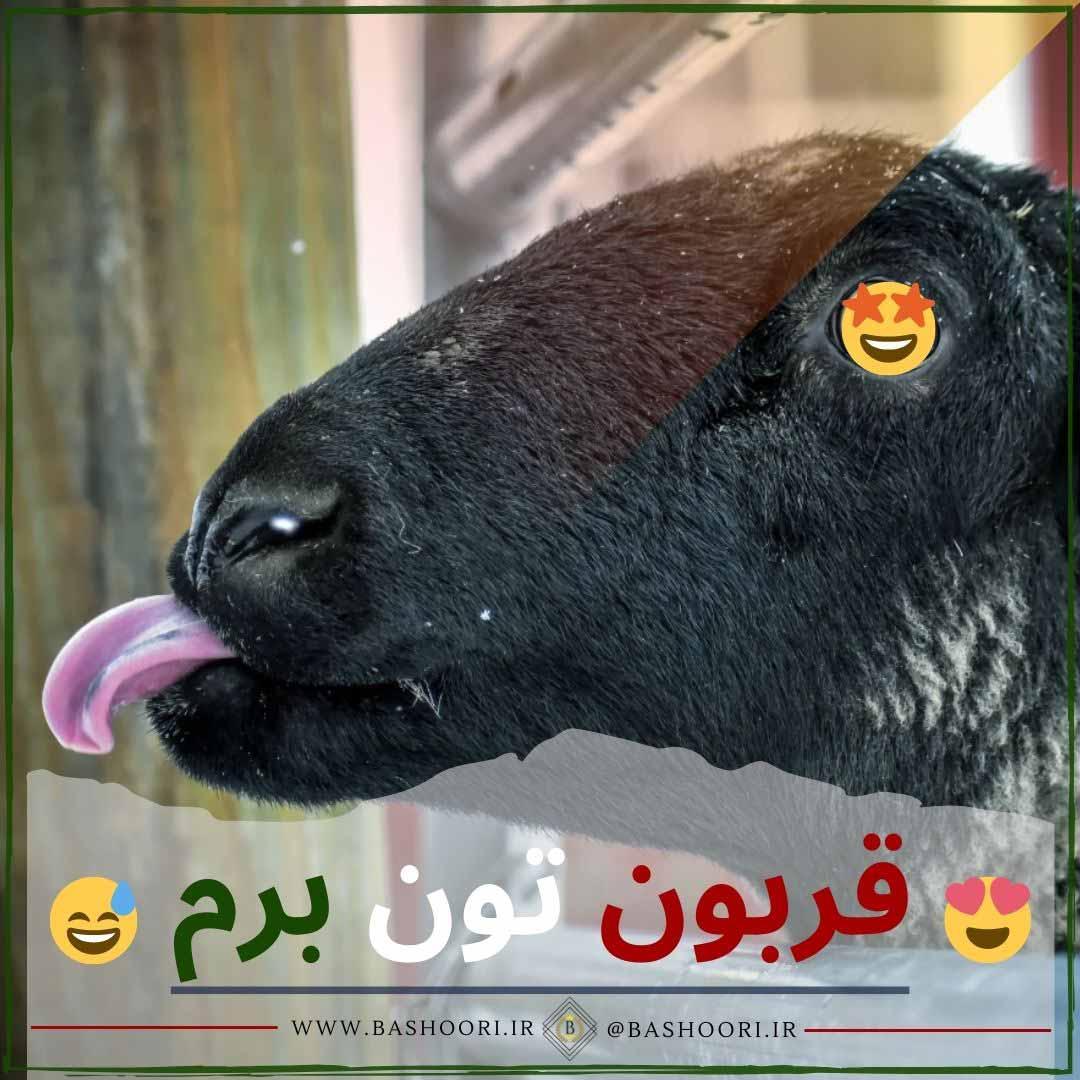 تصاویر عید سعید قربان با متن